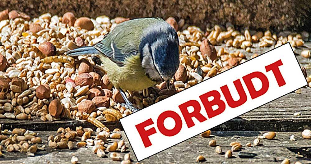 Fuglefodring forbudt